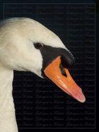 """""""The Swan - Endlich schön"""""""