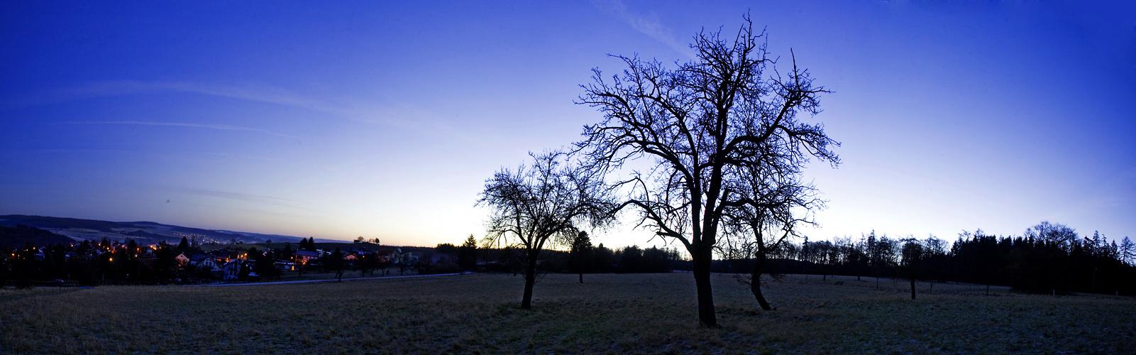 the three trees...