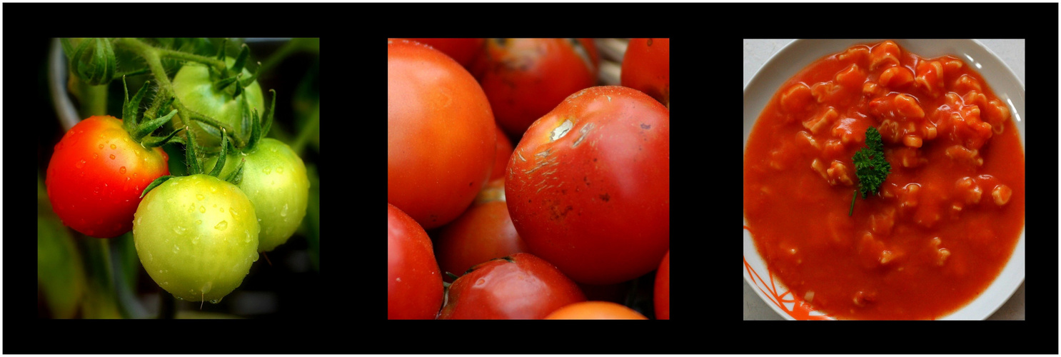 the tomato-story
