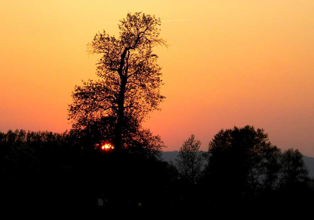 the tree 02