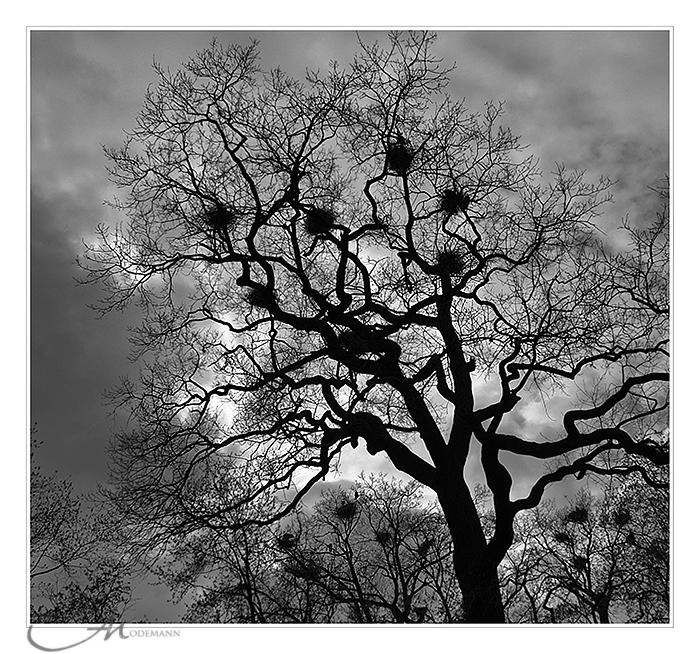 ~ the tree ~