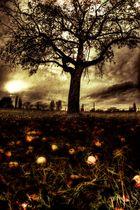The tree....