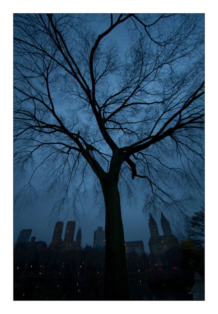 The Tree in Central Park