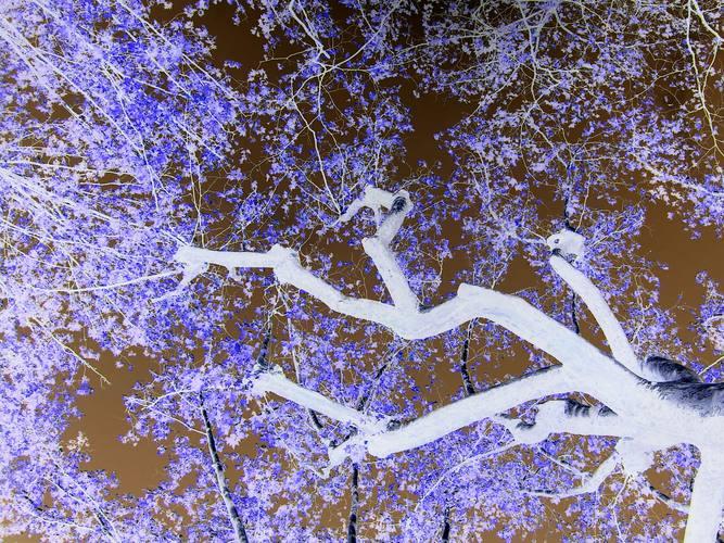 The tree's beauty