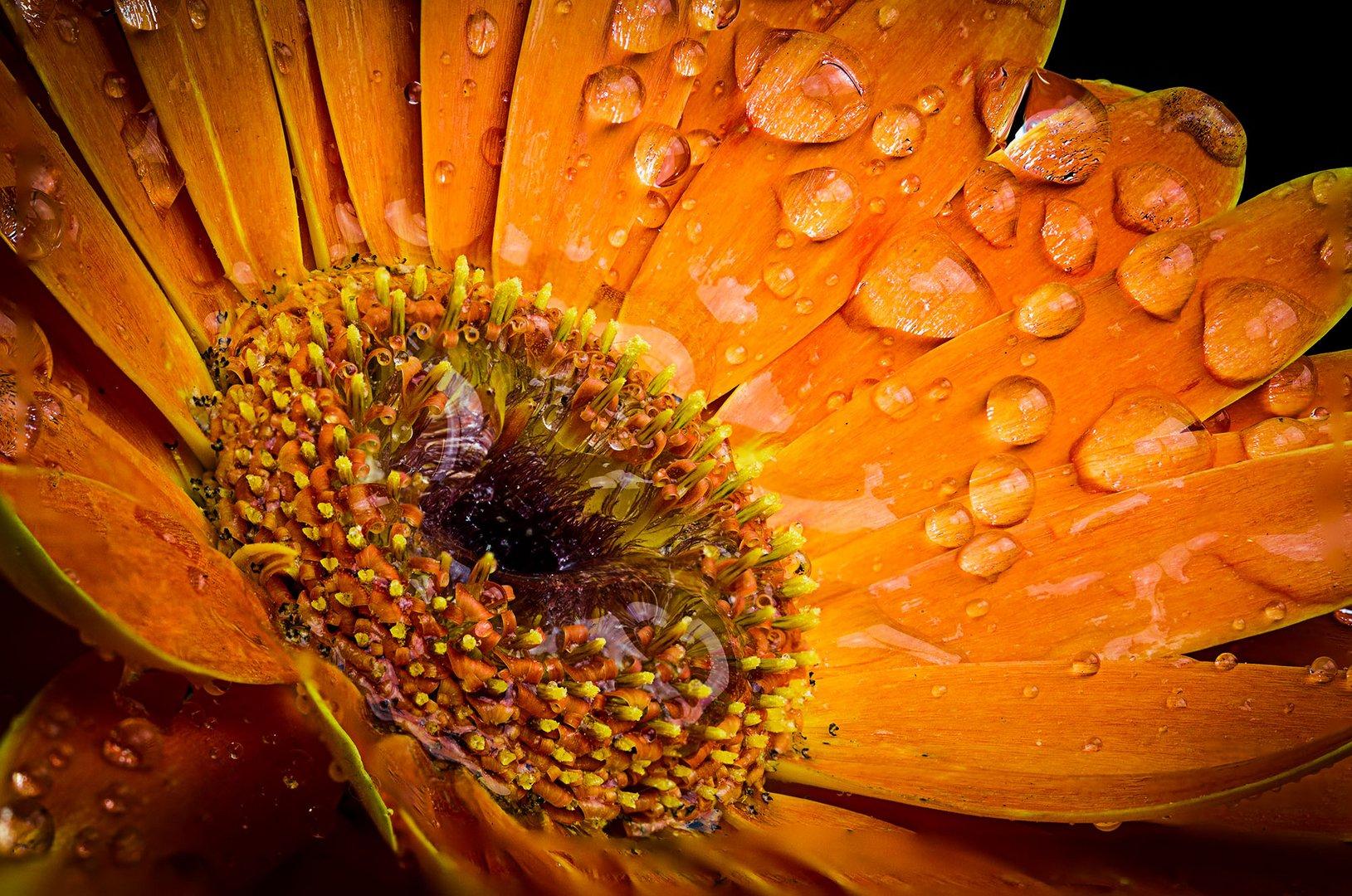 the ultra sharp flower
