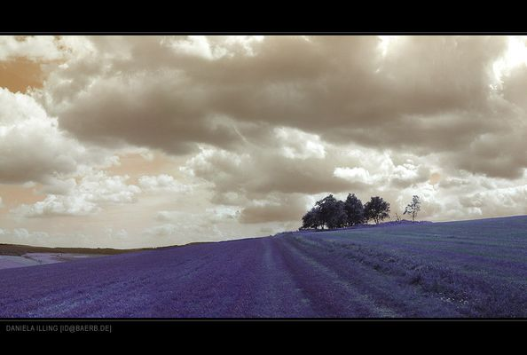 the violet way of life