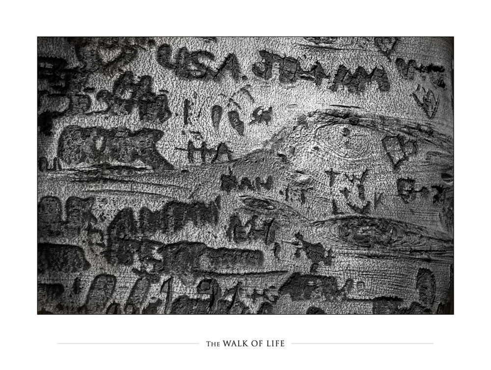 ::: THE WALK OF LIFE :::