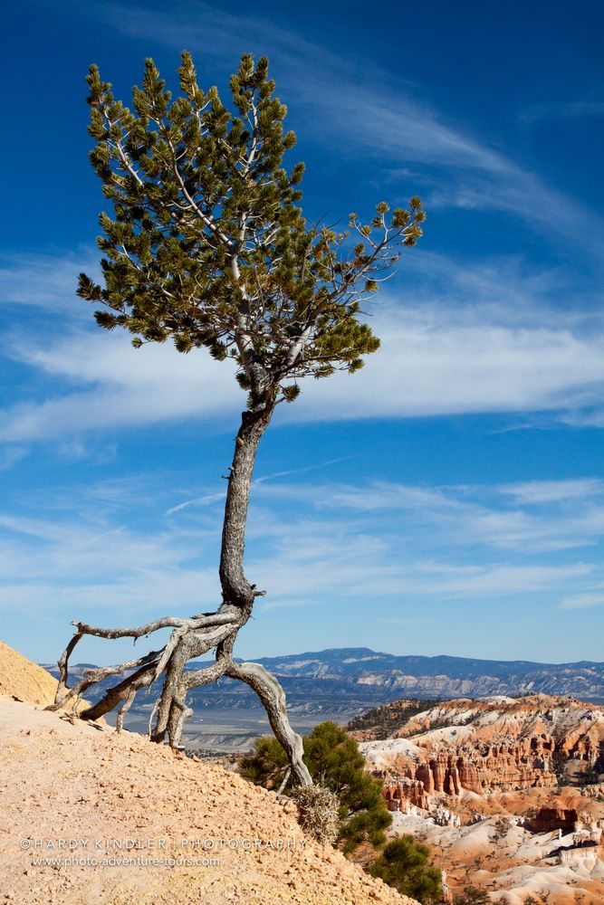 The walking tree II