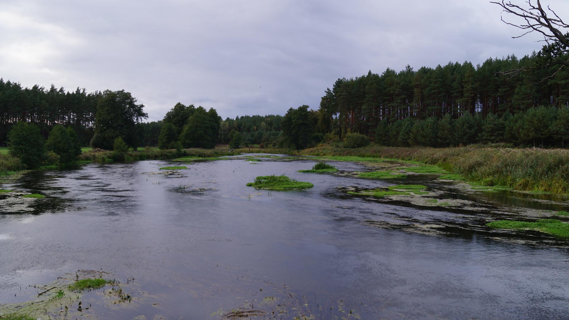 The Wda River.