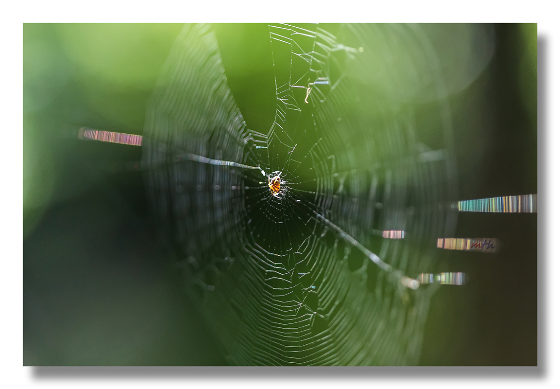 The Web...