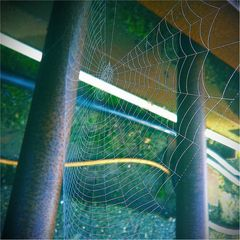 The Web Trap… is all senseless in Web???
