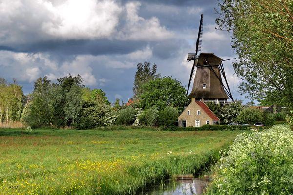 The Windmill  (2)