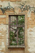 The window ...