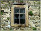 the windows (3)