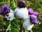 The wonder flora...