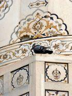 Theatre pour pigeons