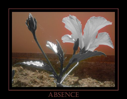 Theme of absence