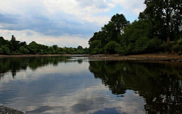 Themsefahrt von London nach Hampton Court 100: Und ruhig fließt der Strom...