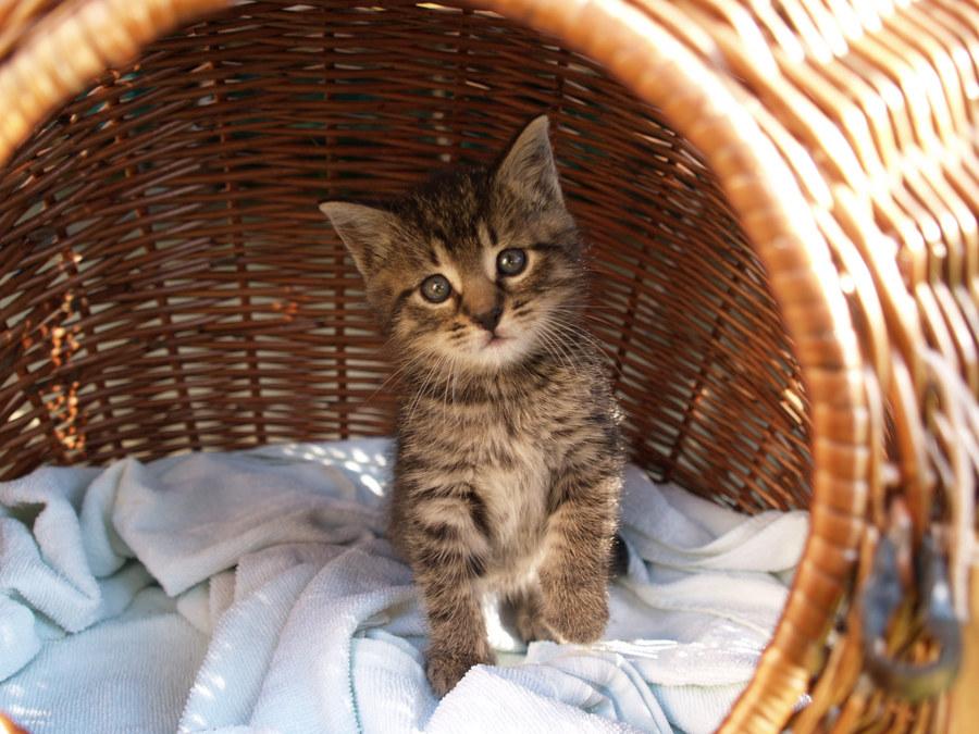 Theo, 7 Wochen