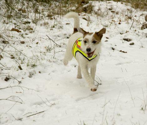 Theodor - weißer Hund auf weißem Grund