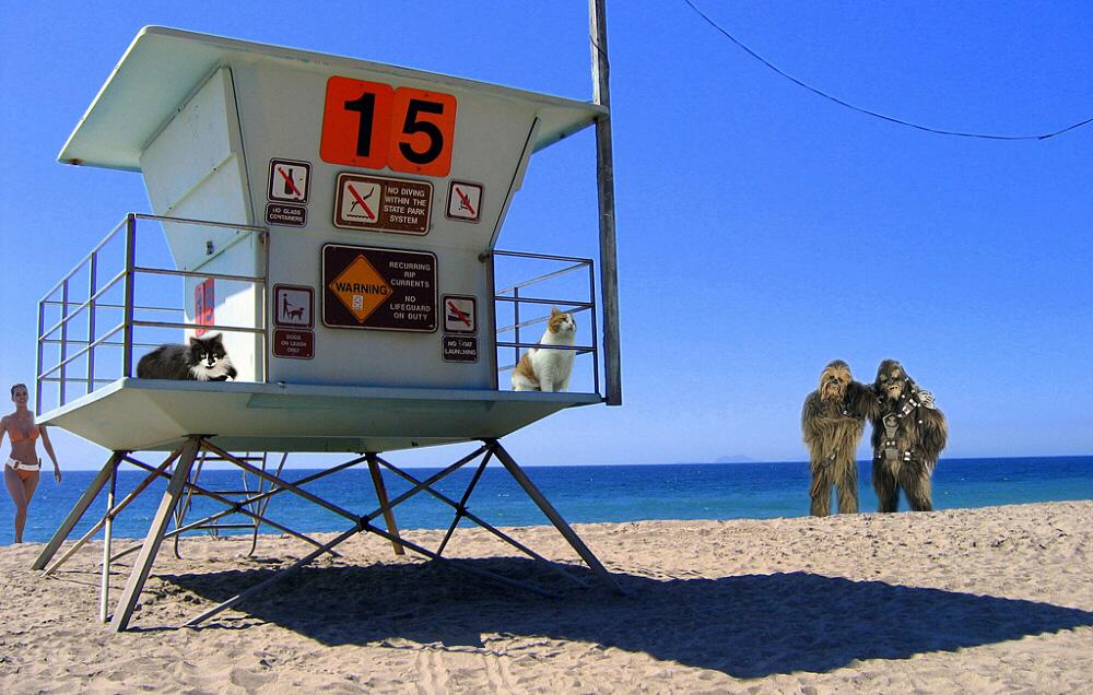 Theos und Yoshis Abenteuer ... in Malibu