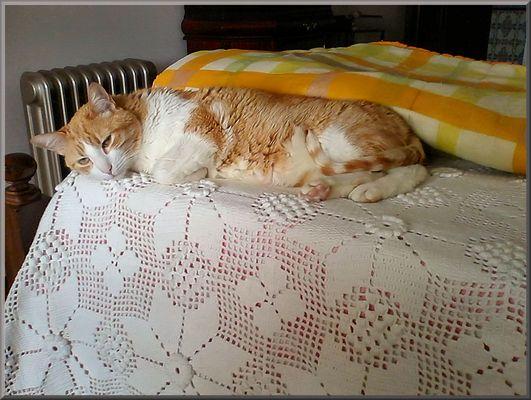 This corner of Vitoria bed is mine