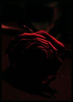 this rose will never die, this rose will never die