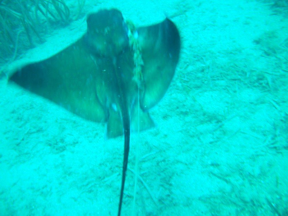 Thoback ray