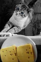 Thommy und der Käse