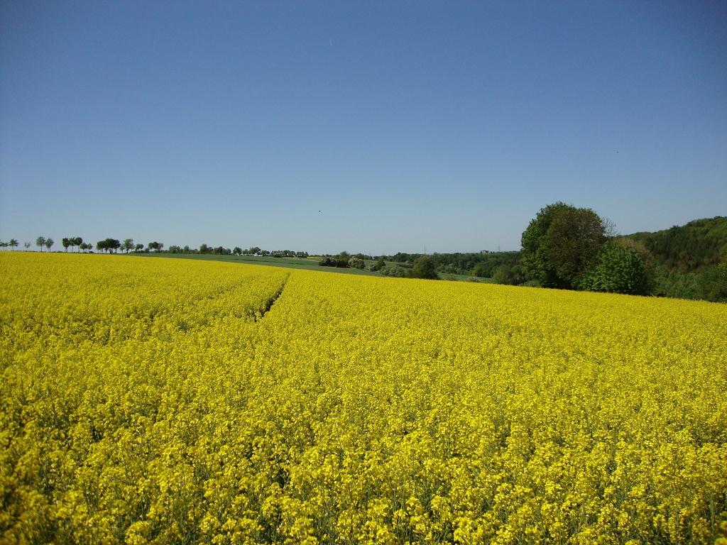 Thorsten Seyfarth - gelbe Felder