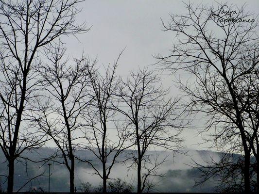 Those foggy days