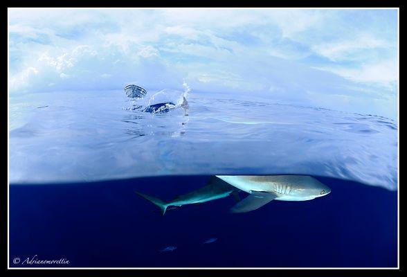 threatening fins