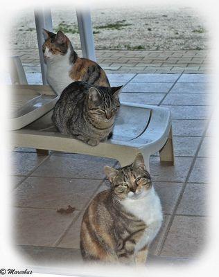 Three cool cats !