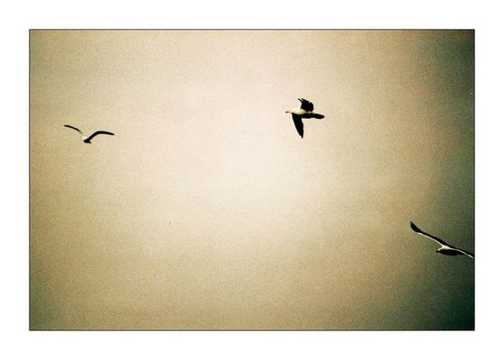 [ three little birds ]