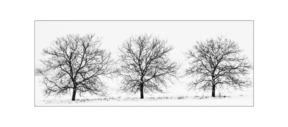 - three tree -