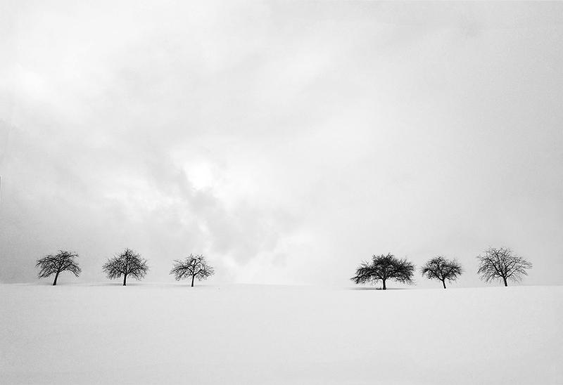Three Trees for Three...