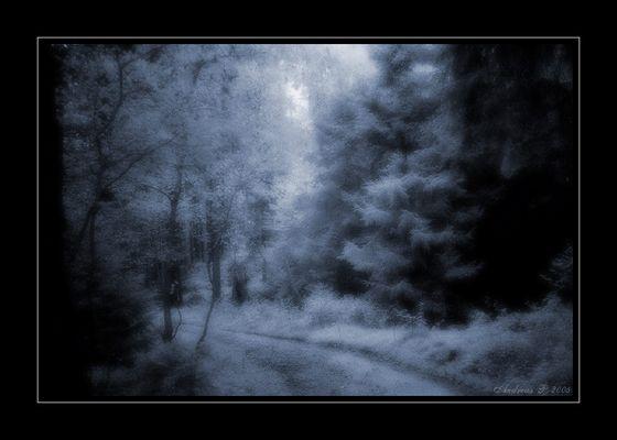 ...through the forgotten woods...