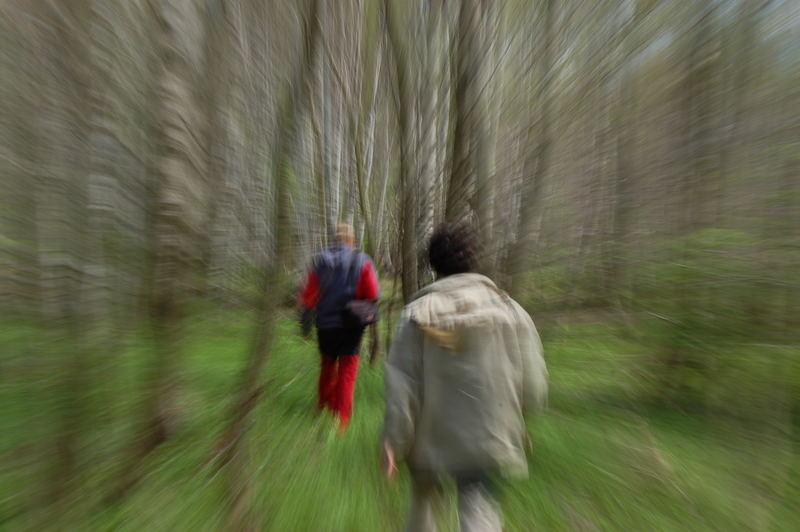 thru woods
