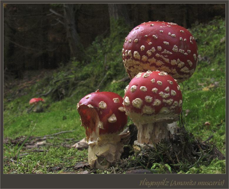 Thüringer Pilzlandschaften