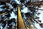 Thüringer Wald nur nach dir... ;)