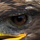 Thunderbird Magic Eye