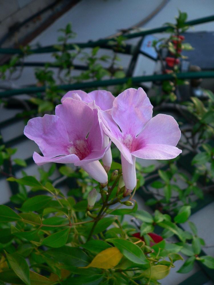 Ti regalerò.........un fiore