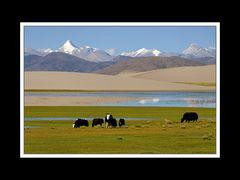 Tibet 2010 045