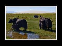 Tibet 2010 049