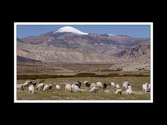 Tibet 2010 075