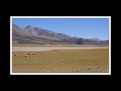 Tibet 2010 099