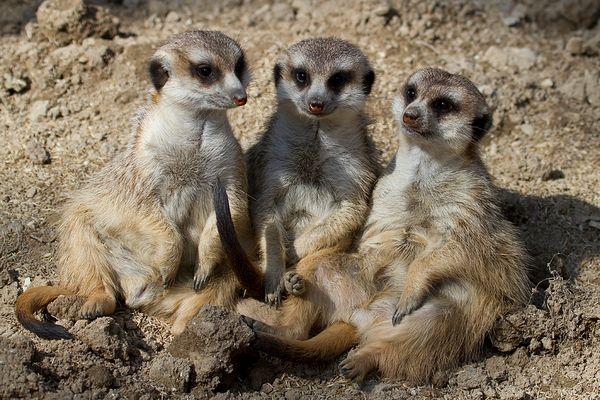 Tick, Trick & Track - die coolsten Typen im Opel-Zoo