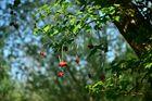 Tideauenwälder mit Beeren