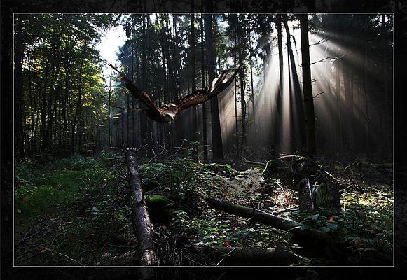 Tief aus dem Wald