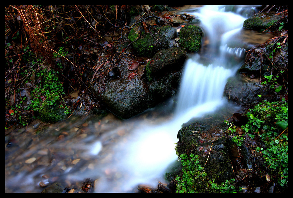 Tief im Wald 2